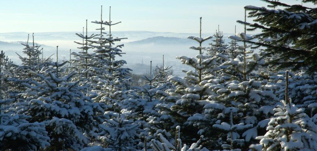ad-photo-snow