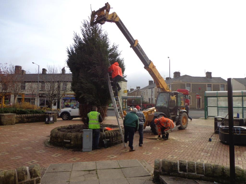 town-centre-norway-spruce1-