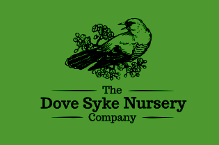 Dove Syke Nursery
